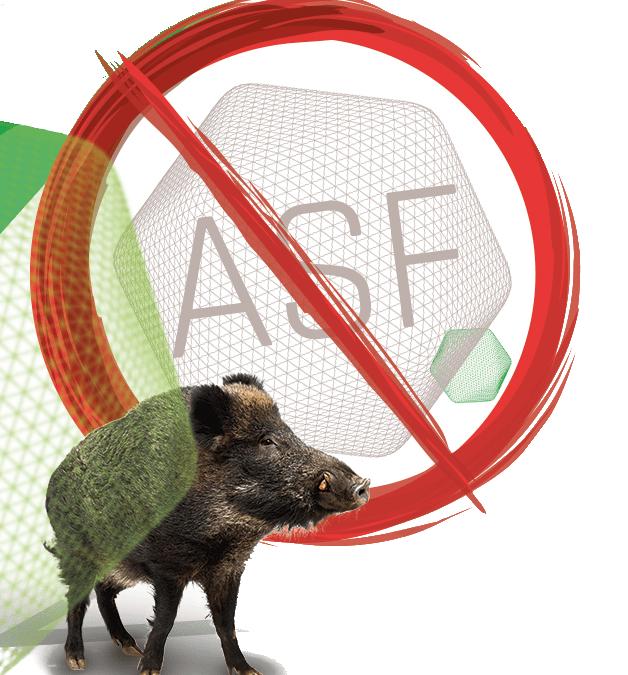 Jak prawidłowo wdrożyć program bioasekuracji w chwili rosnącego zagrożenia ASF