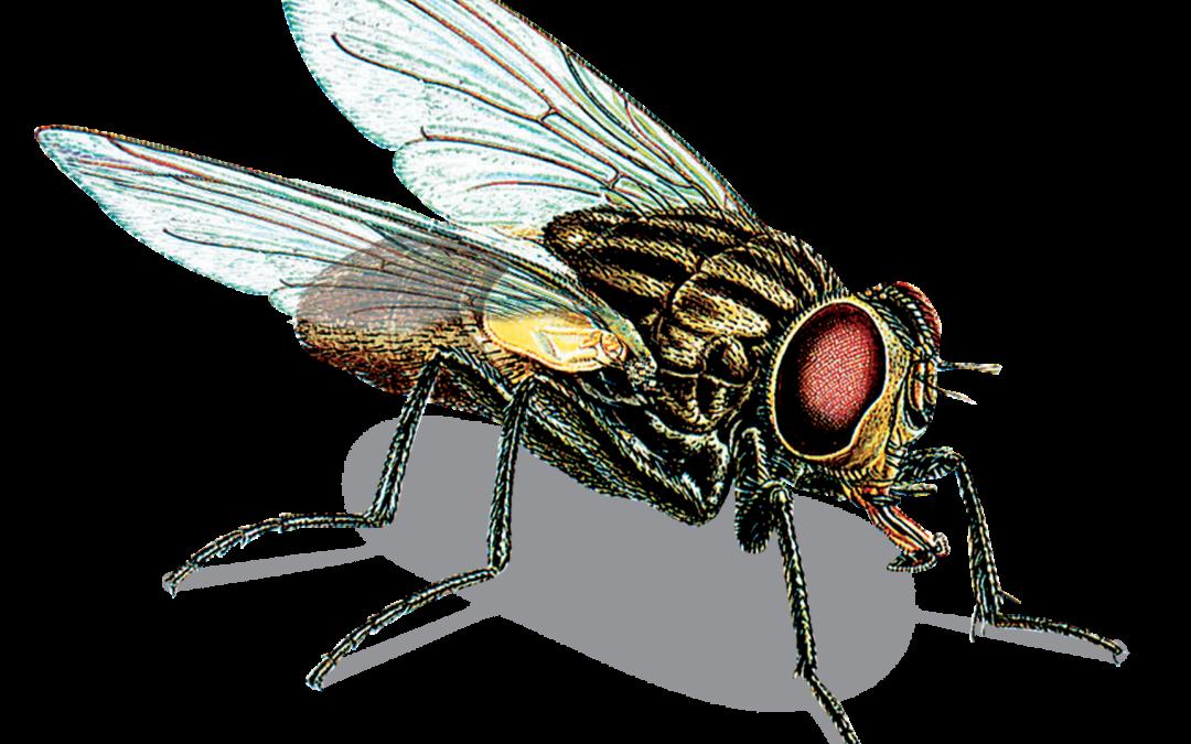 Sezon na insekty…cydy